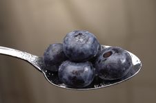 Free Blueberries Stock Image - 1044541