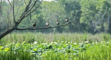 Free Four Duck Standing On Tree Branch Stock Photo - 1045180