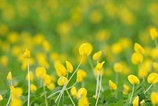 Free Yellow Flowers Stock Photography - 1046232