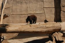 Free Black Bear Royalty Free Stock Photos - 1047308
