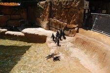 Free Penguins 5 Stock Photo - 1047350