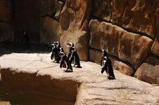 Free Penguins 6 Stock Photo - 1047360