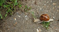 Free Snail Blazer Stock Image - 1048451