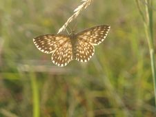 Free Butterfly Royalty Free Stock Image - 1049566