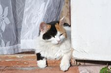 Cat On The Porch Royalty Free Stock Photos