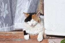 Cat On The Porch 2 Royalty Free Stock Photo