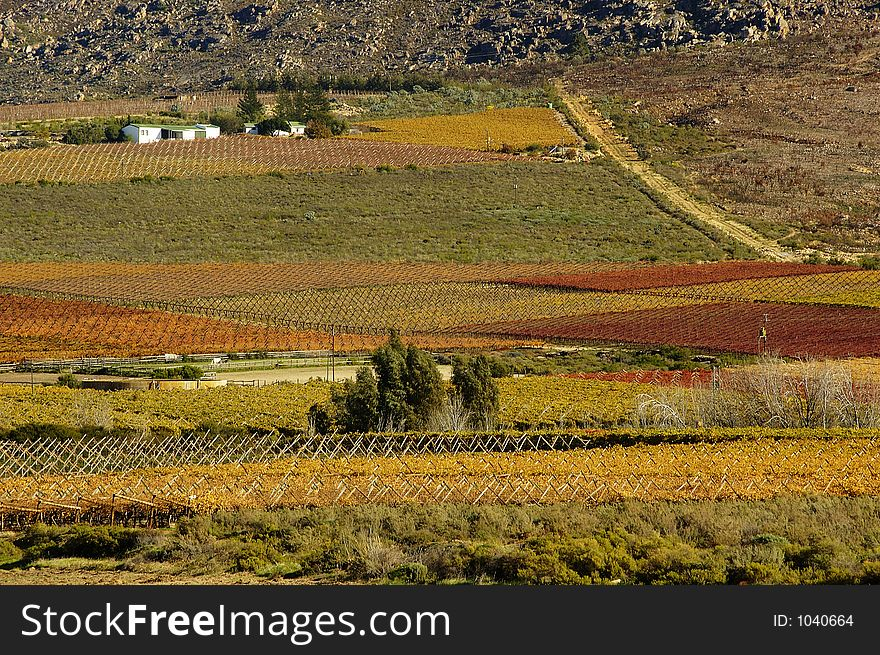 Fall Vineyards13