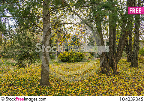 Free End Of The Golden Autumn Royalty Free Stock Photo - 104039345