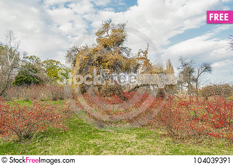 Free End Of The Golden Autumn Stock Image - 104039391