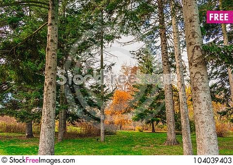 Free End Of The Golden Autumn Stock Photos - 104039403