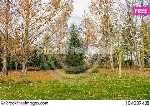 Free End Of The Golden Autumn Royalty Free Stock Photos - 104039438