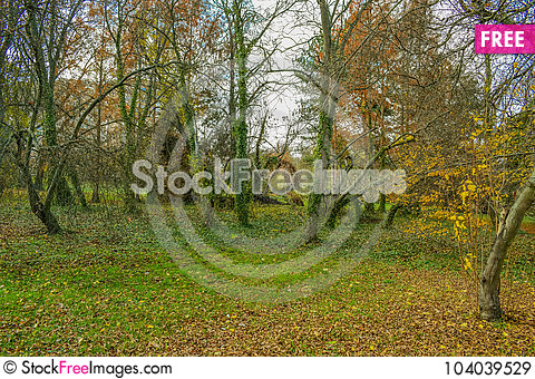 Free End Of The Golden Autumn Royalty Free Stock Images - 104039529