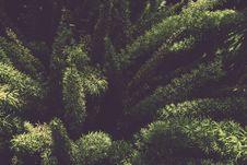 Free Blur, Botanical, Close-up, Conifer Royalty Free Stock Photos - 104032018