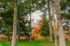 Free End Of The Golden Autumn Stock Photos - 104039403