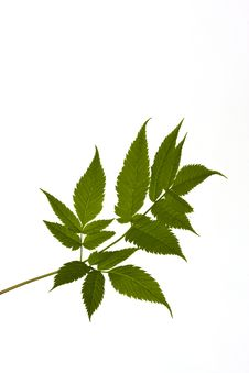 Free Green Leave Stock Photo - 10417870