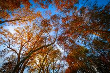 Free Worms Eye-view Of Trees Under The Blue Sky Royalty Free Stock Photos - 104286958