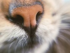 Free Animal, Animal, Photography, Blur, Royalty Free Stock Photography - 104367087