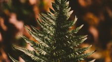 Free Green Tree Royalty Free Stock Images - 104450129