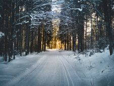 Free Landscape Photography Of Snow Pathway Between Trees During Winter Stock Image - 104512791