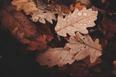 Free Withered Leaves Photo Royalty Free Stock Images - 104512819