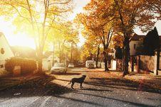 Free Dog On Concrete Road Royalty Free Stock Image - 104512836