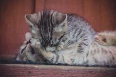 Cute Grey Kitten Retro Stock Images