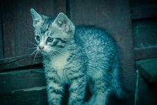 Free Cute Grey Kitten Retro Royalty Free Stock Photos - 104585008