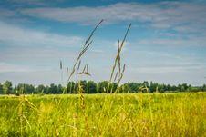 Free Green Grass Lawn Royalty Free Stock Photo - 104587005