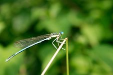Free Dragonfly Royalty Free Stock Images - 10468909