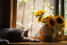 Free Gray Cat Near Gray Vase With Sunflower Royalty Free Stock Image - 104635676