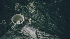 Free Ceramic Teacup Near White Flowers With Plant Stock Photo - 104635690