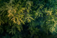 Free Green Tree Macro Photography Royalty Free Stock Photography - 104635787