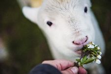 Free Photo Of Person Holding Flower Eating White Animal Stock Photos - 104635803