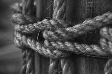 Free Grayscale Photo Of Rope On Log Royalty Free Stock Photos - 104712358