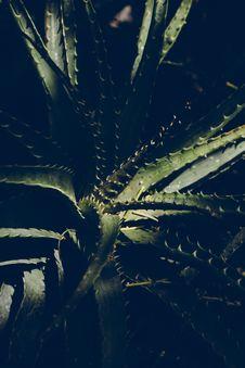 Free Blur, Botanical, Cactus, Close-up Royalty Free Stock Photos - 104806788