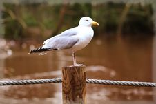 Free Animal, Avian, Beak Stock Photography - 104963032