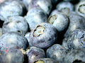Free Blue Berries Stock Images - 1055734