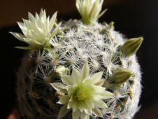 Cactus On Black Background Royalty Free Stock Photo