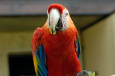 Free Macaw Parrot Stock Photography - 1050482
