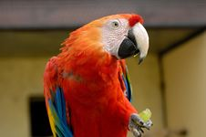 Free Macaw Parrot Stock Images - 1050484