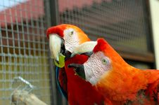 Free Macaw Parrot Royalty Free Stock Photos - 1050488