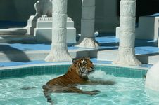 Free Tiger In Pool Stock Image - 1050611