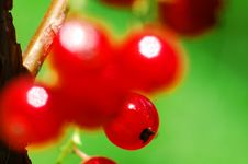 Free Red Currants Stock Photography - 1051962