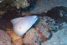Free Grey Eel Stock Image - 1053181