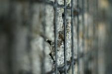 Free Stones In Their Prison Royalty Free Stock Photo - 1054065