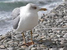 Free The Seagull Stock Photography - 1054752