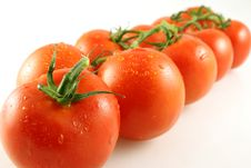 Free Tomato Perspective Royalty Free Stock Photos - 1055198