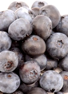 Free Blueberries 2 Royalty Free Stock Images - 1055569