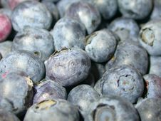 Free Blue Berries Royalty Free Stock Photo - 1055735
