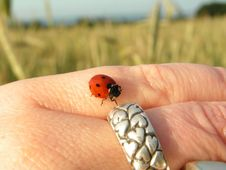 Free Ladybird On Hand Royalty Free Stock Photography - 1055747